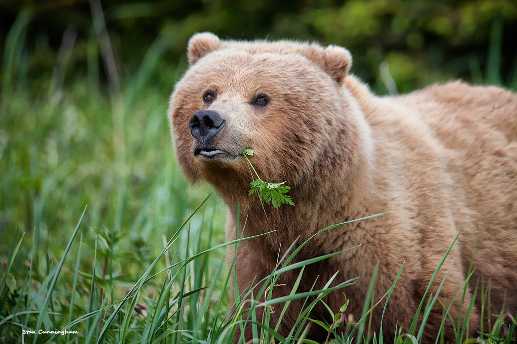 urso mercado financeiro